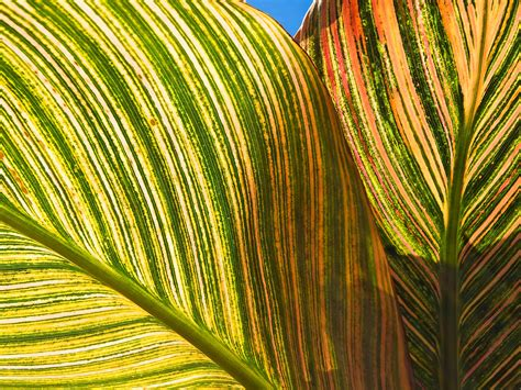 Bilder Aus Getrockneten Blättern by Linien Auf Bl 228 Ttern Hintergrundbilder Linien Auf