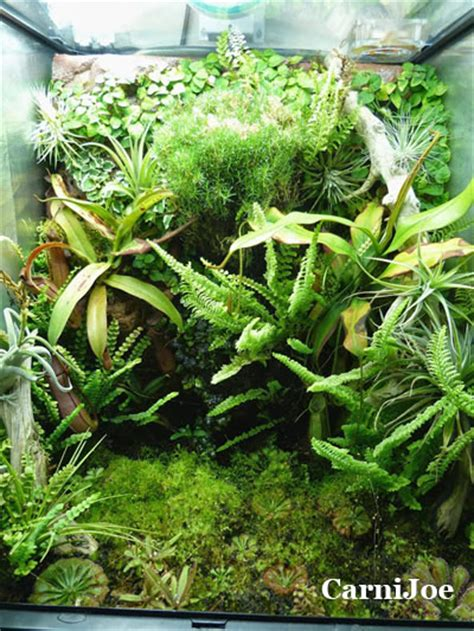 construire un terrarium tropical le site carnivore