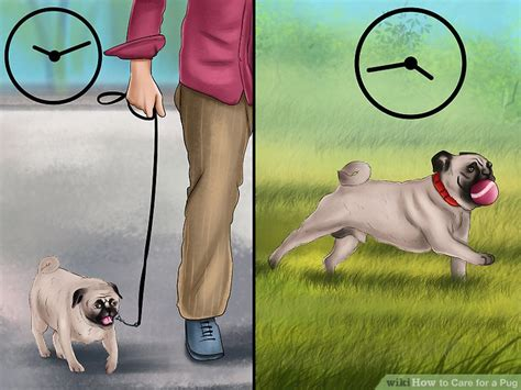 are pugs easy to care for 4 ways to care for a pug wikihow
