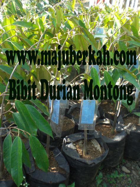 Bibit Durian Bawor Purworejo bibit tanaman rempah rempah tanaman rempah rempah jual
