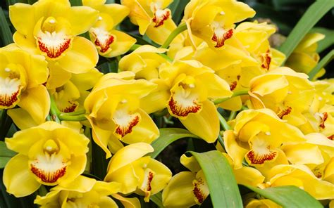 orchidea significato dei fiori qual 232 il significato dei fiori gialli