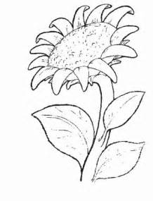 sunflower coloring page free coloring pages printable sunflower coloring pages