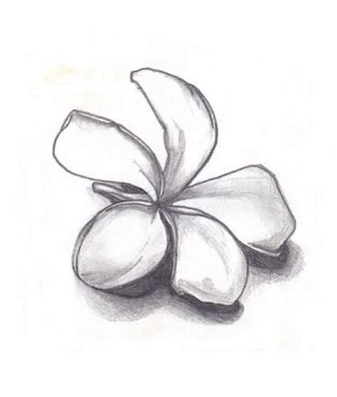 plumeria flower drawing flowers for gt plumeria flower drawing black and white
