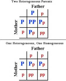 color blindness punnett square color blindness punnett square