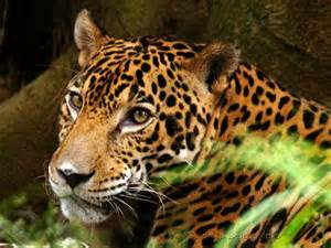 Jaguar Reserve Belize Nature And National Park Guide