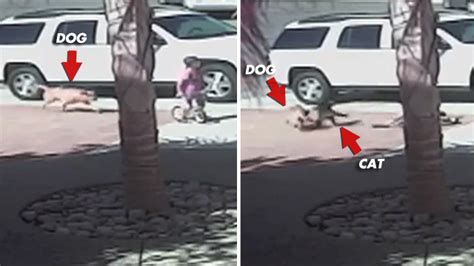 cat saves boy from cat saves boy from attack tmz