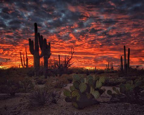 tucson arizona sunset flaming sky desert landscape  cactus desktop hd wallpapers  mobile