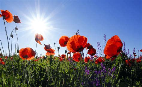 summer gardening summer gardening tips to keep you growing in the heat
