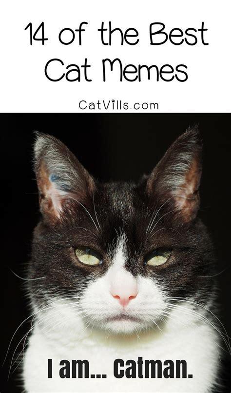 Best Cat Meme - best 25 best cat memes ideas on pinterest funny disney