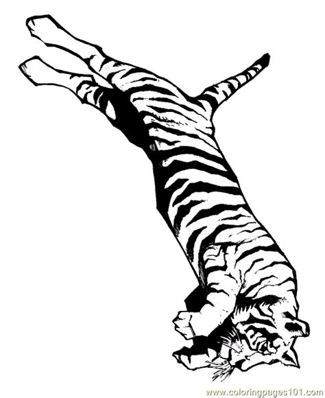 tiger family coloring page free coloring pages of tiger family