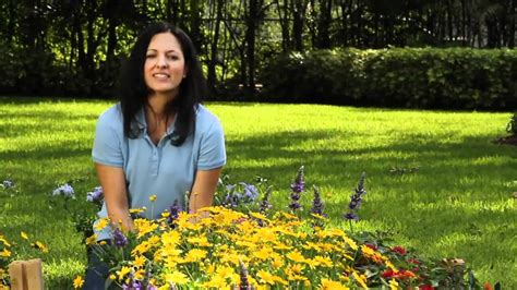 planting a butterfly garden flowers for florida