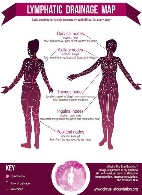 Can Skin Brushing Cause Detox Symptoms by Lymphdrainagemap Circuellefoundationsmall Health