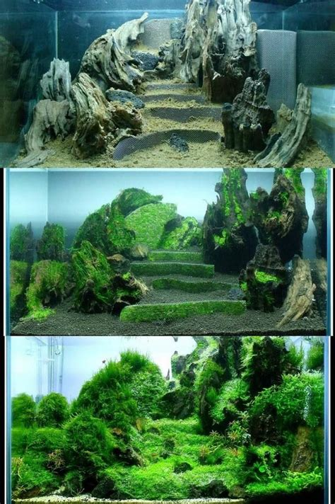 how to set up an aquascape evolution terraces in aquascaping learn of how things
