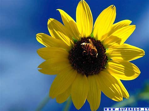immagini fiori desktop sfondi desktop fiori 58 in alta definizione hd