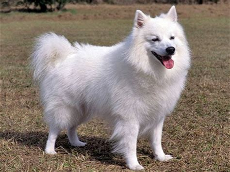 names for white dogs best white names top 500 names for white dogs