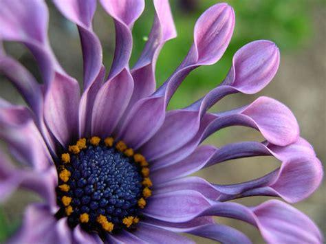 Imagenes Flores Impresionantes | 14 fotos de flores impresionantes para recibir la primavera