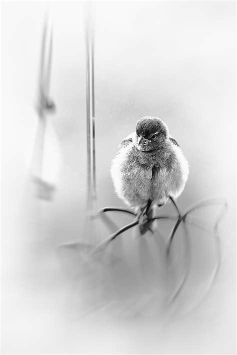 25+ Trend Terbaru Sketsa Gambar Burung Gereja - Tea And Lead