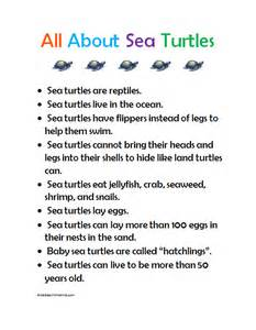 preschool fun with emma learning about sea turtles with