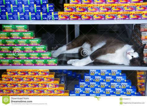 fim store a cat sleeping in a window display editorial photography