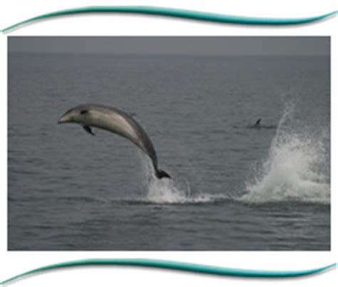 boat trip terms and conditions moray firth marine charters from gemini marine charters