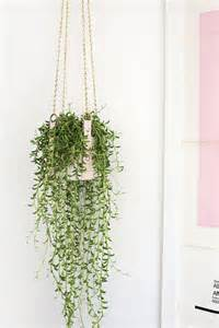 Best Indoor Hanging Plants by 17 Best Ideas About Hanging Plants On Pinterest Diy