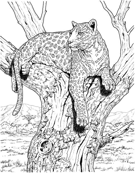 advanced cat coloring pages big cat coloring pages