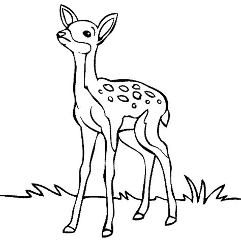 free coloring pages deer