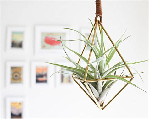 Diy Hanging Plant Pot by 5 Unique Ways To Display Air Plants