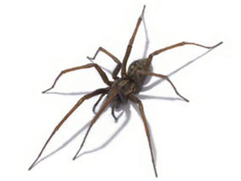 Can A Garden Spider Kill You Crawling With Spiders Blame The Warm Uk News