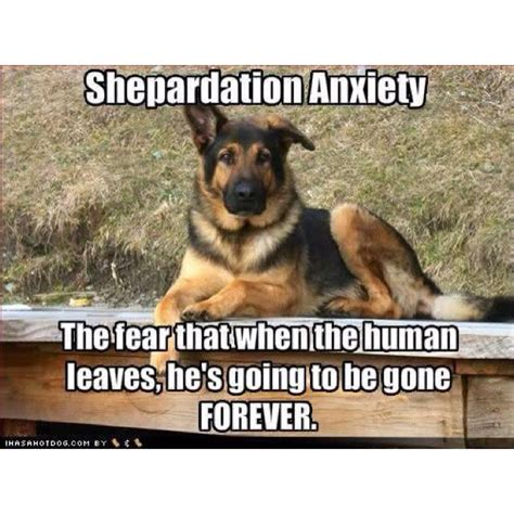 Funny German Shepherd Memes - 3070 best fur baby stuff images on pinterest animal