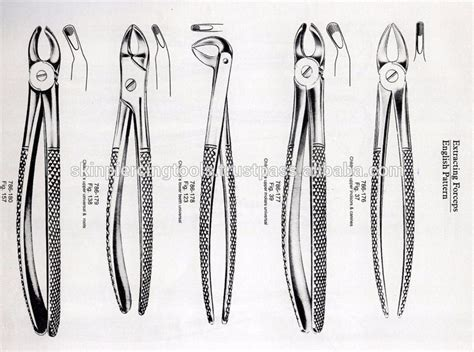 english pattern dental forceps extracting forceps english pattern fig 145 upper roots
