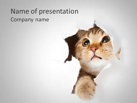 Cat Hides Powerpoint Template Backgrounds Id 0000004445 Cat Powerpoint Template