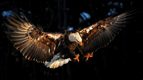 eagle tattoo hd wallpaper great wild eagle wallpaper hd 2 high resolution wallpaper