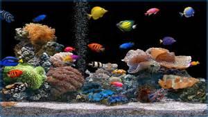 Fish aquarium screensaver free download car interior design