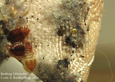bed bug control montgomery al extermitech