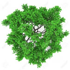 best trees tree plan view png trees plan view trees trees tops and on