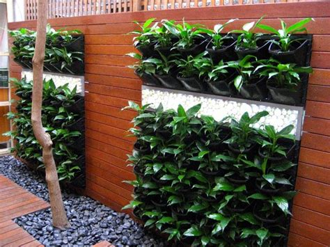 Vertical Garden Australia Make Vertical Garden In A Narrow Land 4 Home Ideas