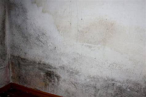 schimmlige matratze missst 228 nde in asylquartieren oesterreich orf at