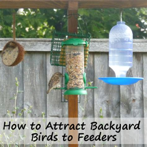 how to attract wildlife to your backyard attracting birds to feeders all year round