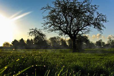 Zen Garten Pflanzen Gegen Zombies Tipps by Den Baum Der Weisheit Bei Pflanzen Gegen Zombies Kaufen
