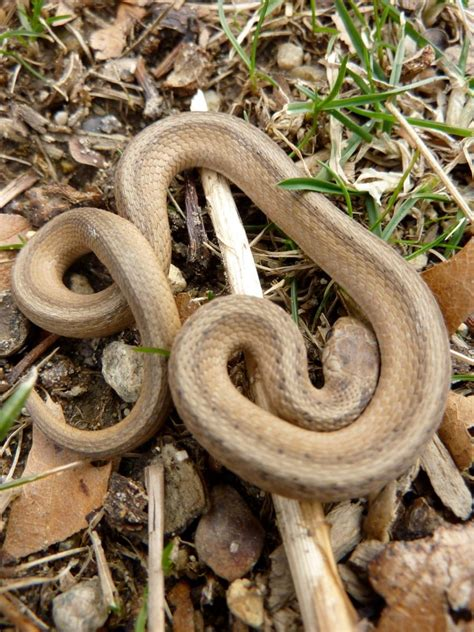 baby garden snakes