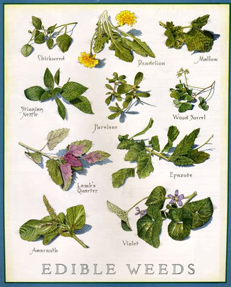 printable list of edible flowers a huge list of edible plants and weeds for survival