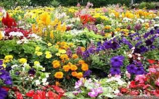 What Is A Flower Garden 1920x1280px 989451 Flower Garden 1559 24 Kb 10 09 2015 By Shadi92