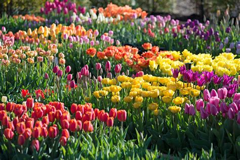 how was your spring bulb garden longfield gardens