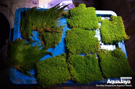 Membuat Aquascape Iwagumi Style | style aquascape aquascape wallpapers weneedfun cara