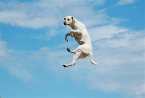 flying puppies top 10 perfectly captured flying dogs