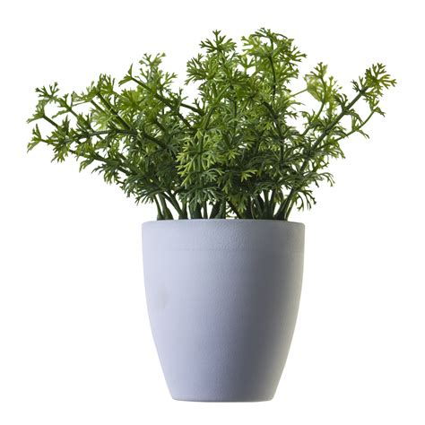 plant png image potted flower   icons  png