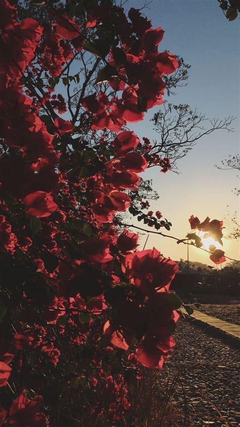 pin  rocsana gonzalez   drops flower wallpaper