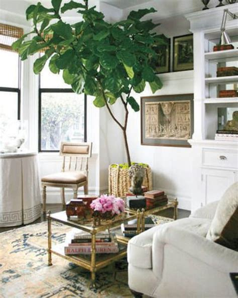 home decor plants living room coat indoor tree plants living room pinterest home