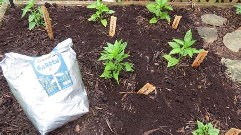 Coffee Grounds For Gardening by How To Use Organic Coffee Grounds In Your Garden Get It